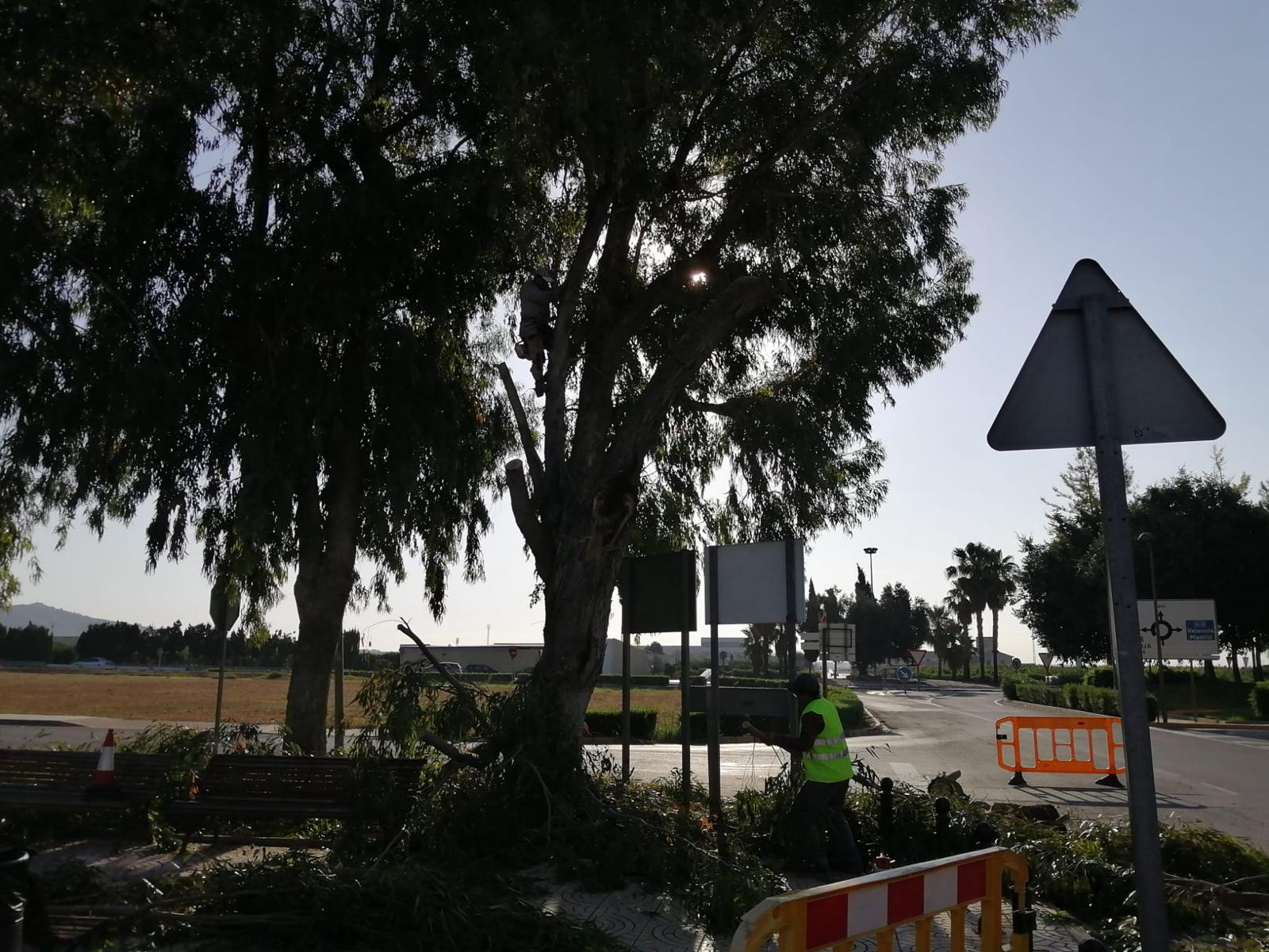 El Ayuntamiento realiza trabajos de poda en pinos, eucaliptos y palmeras