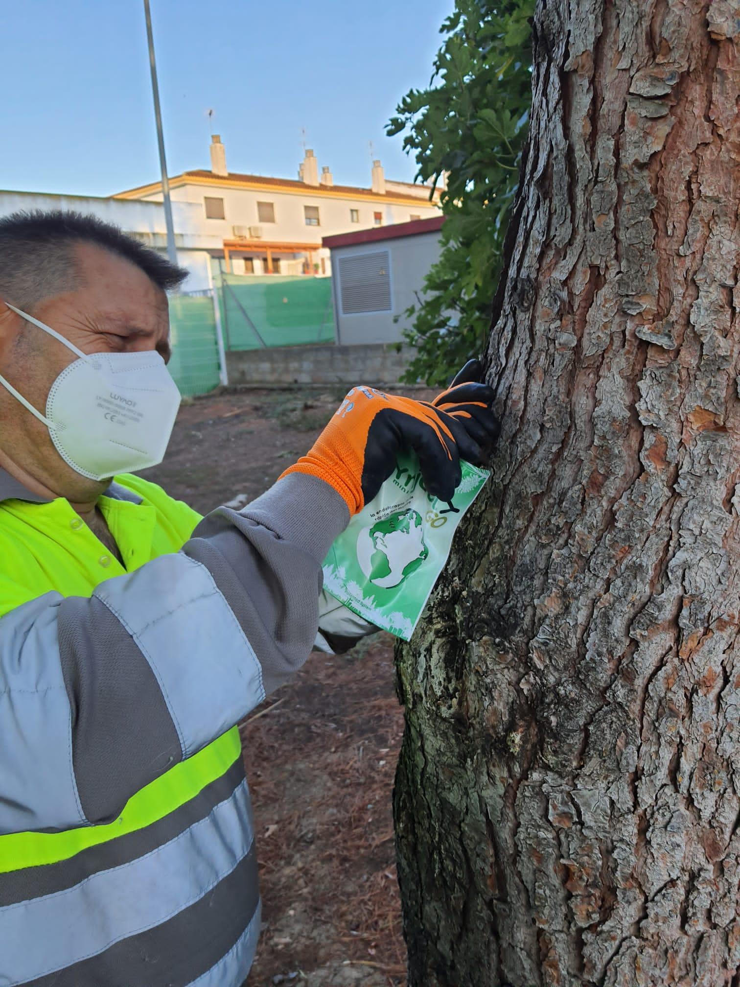El Ayuntamiento de Loriguilla inicia el tratamiento contra la procesionaria en los pinos del municipio